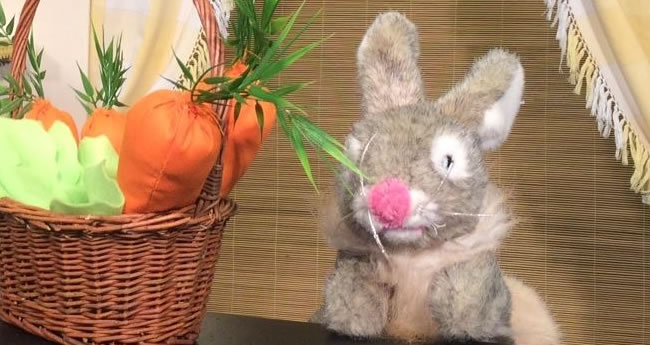 Drôle de lapin