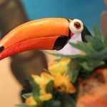 le beau toucan